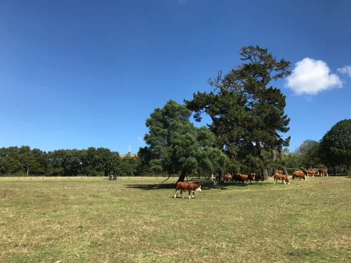 The park around One Tree Hill has an active farm.
